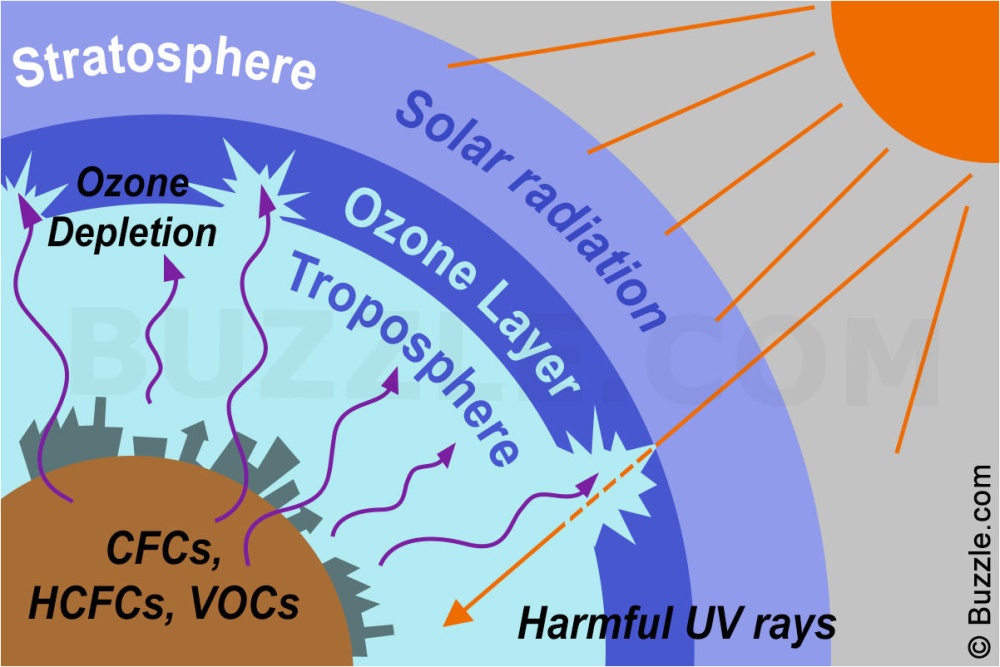 Biology Exams 4 U: Causes and Effects of Ozone depletion - Ozone Hole